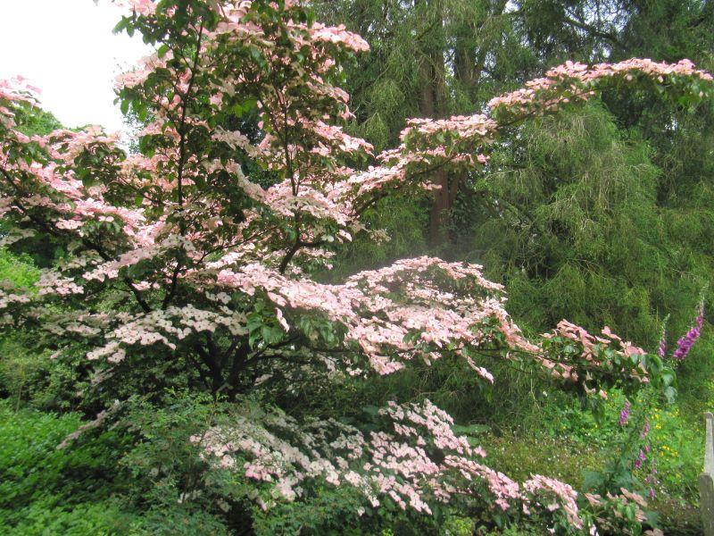 Arboretum, Kalmthout